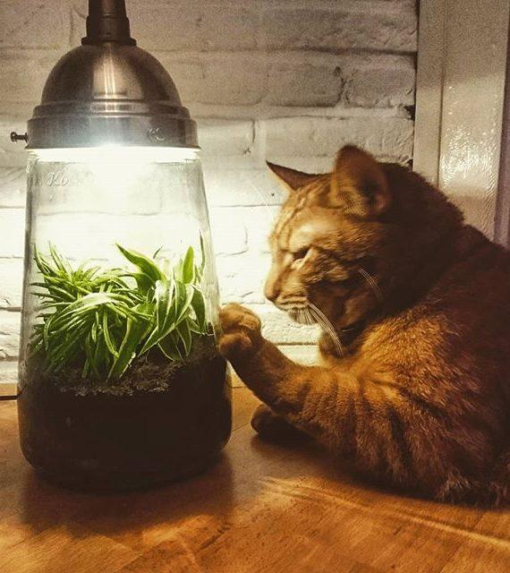kesbeke fleslamp, ecosysteem, gistfles